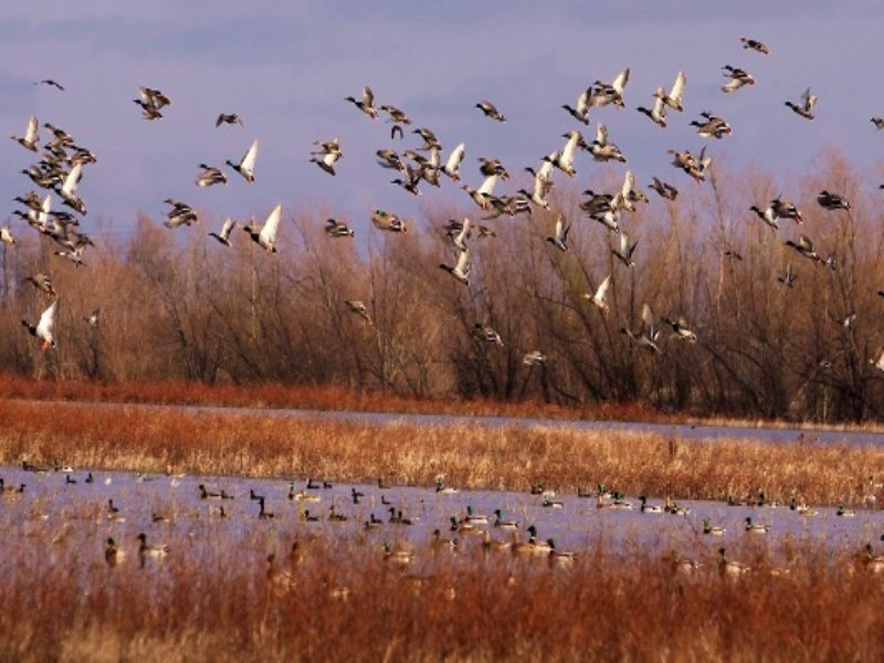 Price Reduced 100ac+/-duck Hunting : Monette : Craighead County : Arkansas