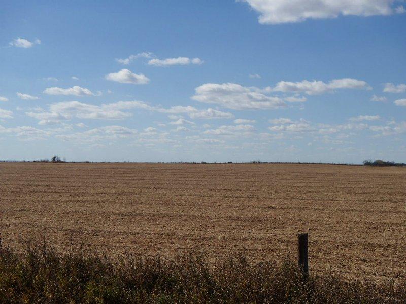 Farm Land Auction - 144.11 Acres : Ellendale : Dickey County : North Dakota