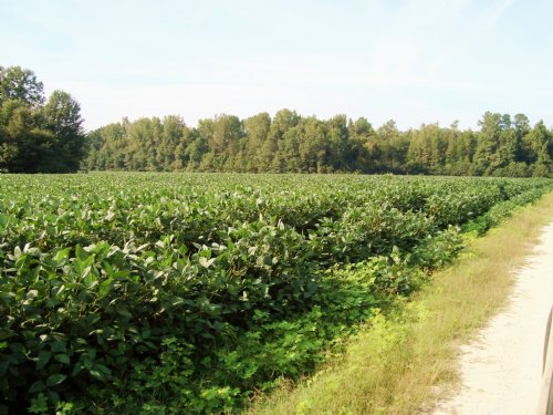 74.74 Acres In Orangeburg : Orangeburg : South Carolina