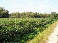 74.74 Acres In Orangeburg : Orangeburg : Orangeburg County : South Carolina