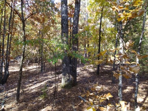 20 +/- Acres On Wye Mountain : Wye : Perry County : Arkansas