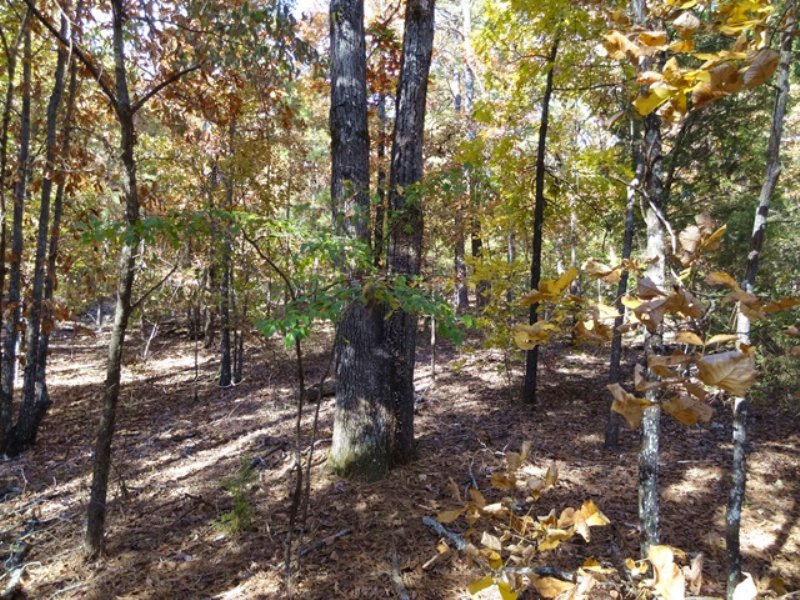 20 +/- Acres On Wye Mountain : Wye : Perry County : Arkansas