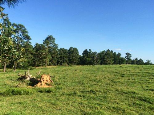 100 Ac +/- Pasture Cr 747 : Paragould : Greene County : Arkansas