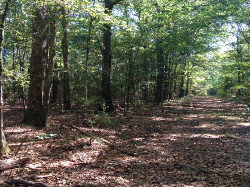 10 Acres Wooded Homesite : Pelahatchie : Rankin County : Mississippi