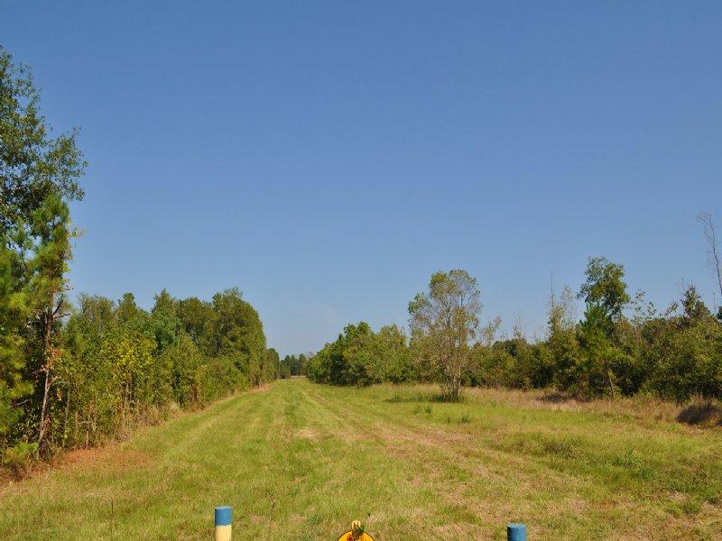 999 Acres Fm 787 : Rye : Liberty County : Texas