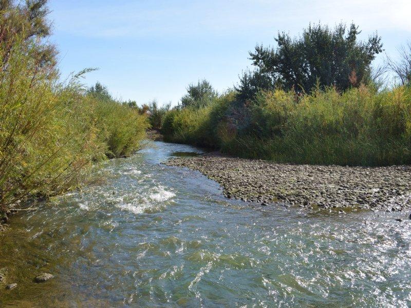 Riverfront Cattle & Hunting Ranch : Trinidad : Las Animas County : Colorado