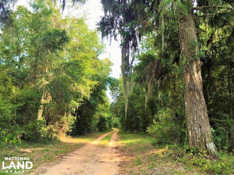 Old Locke 3 Road Linden Demopolis T : Demopolis : Marengo County : Alabama