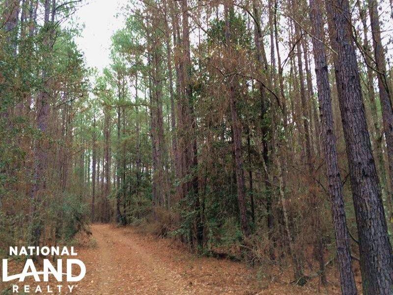 The Red Creek Tract : Millry : Washington County : Alabama
