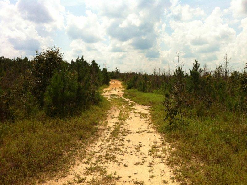 The Beaver Dam Road Tract : Chatom : Washington County : Alabama