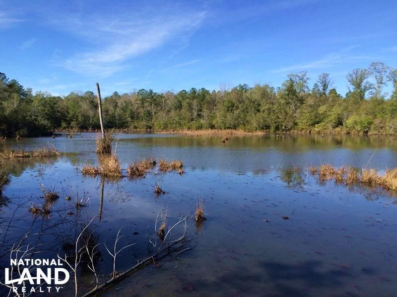 The Larkin Spring Branch Chunchula : Chunchula : Mobile County : Alabama