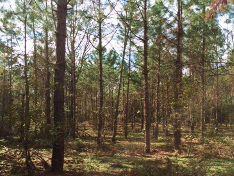 83 Acres With Creek Frontage : Jasper : Hamilton County : Florida