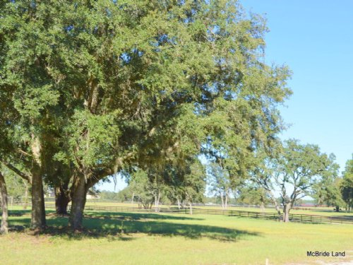 Thunder Ranch 13.98 Acres : Anthony : Marion County : Florida