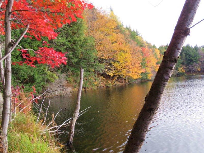 Paradise On Beaver Meadow Lake : Smyrna : Chenango County : New York