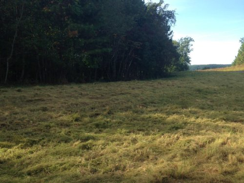 4.52+/- Acres For $15,000 : South Pittsburg : Marion County : Tennessee