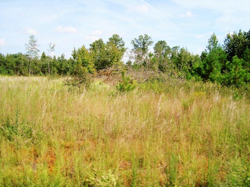 77 +/- Acres In Orangeburg : Orangeburg : Orangeburg County : South Carolina
