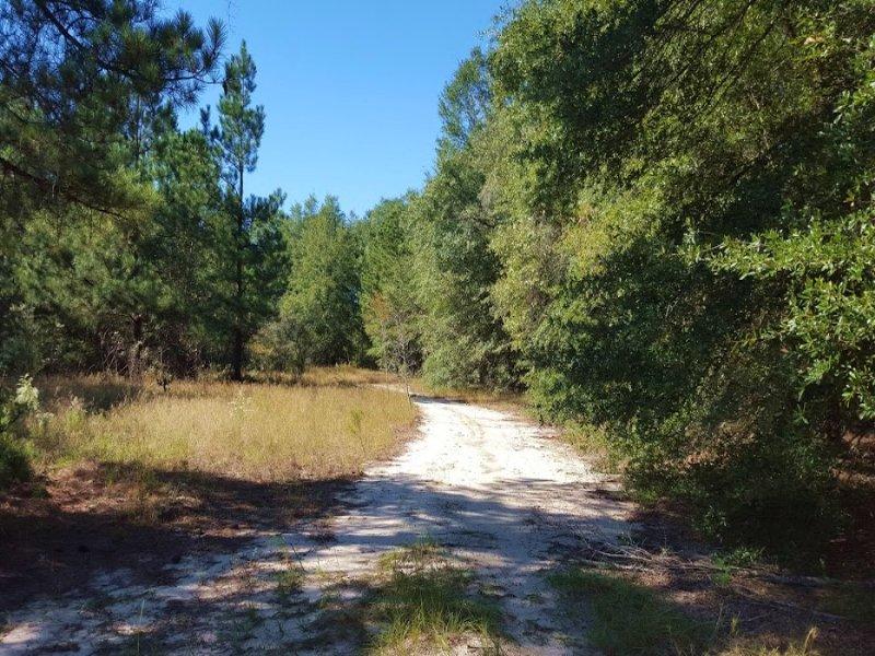 754 +/- Acres In Aiken : Aiken : Aiken County : South Carolina