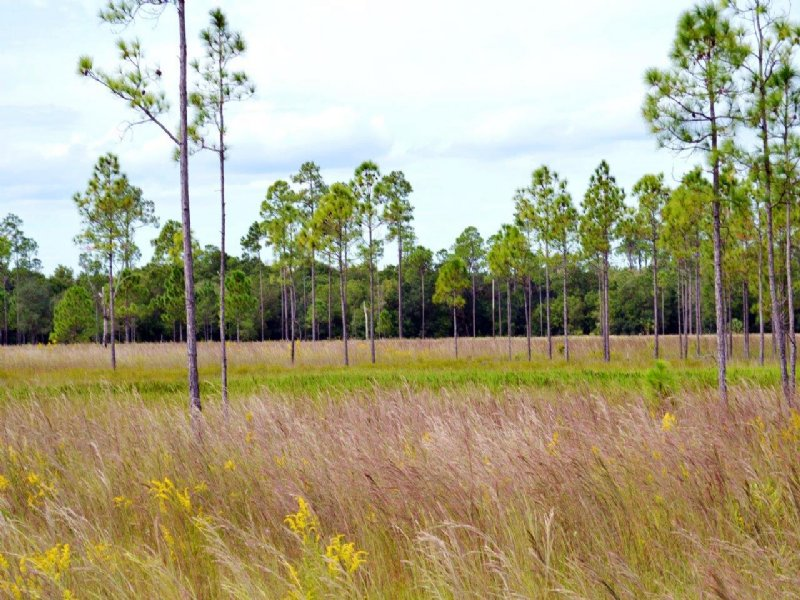 Parnell Road Ranch And Hunting : Zolfo Springs : Hardee County : Florida