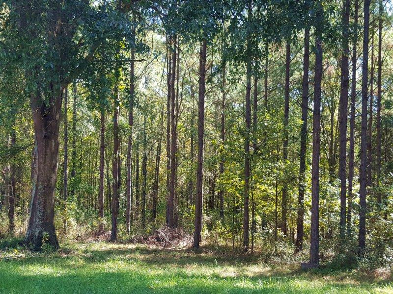 169 Acres : Gaffney : Cherokee County : South Carolina