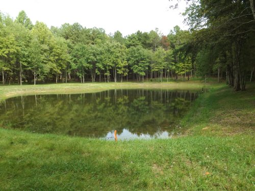 6 Acres With Pond : Spotsylvania County : Virginia