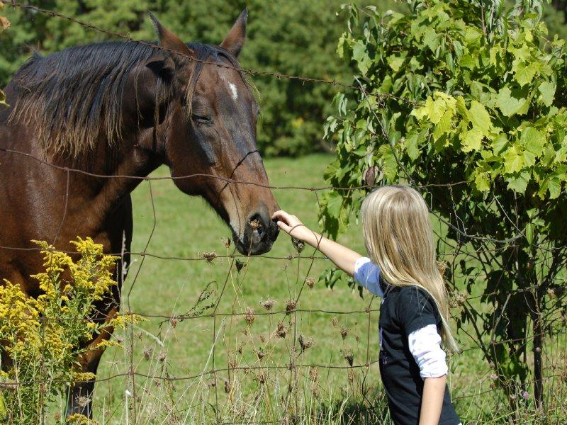 Hobby Farm, Horse Farm, Estate Home : McCormick : McCormick County : South Carolina