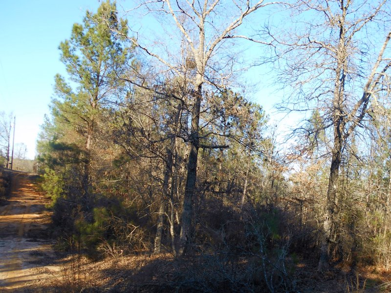 17 Wooded Acres - Septic & Well : Reynolds : Taylor County : Georgia