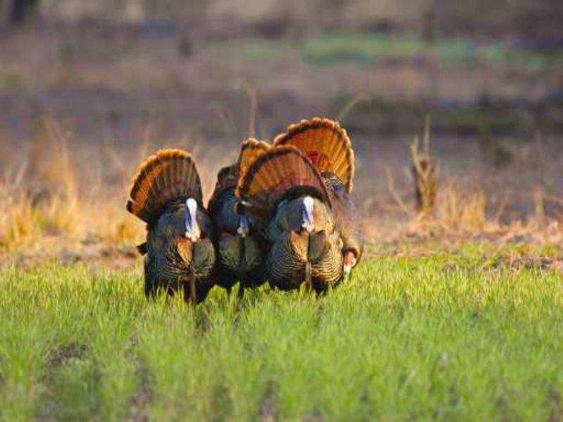 Bucks Bend Farm : Weogufka : Coosa County : Alabama