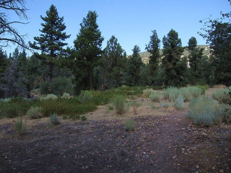 Big Bear City Residential Lot4sale : Big Bear City : San Bernardino County : California