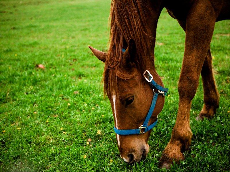 Horse Farm, Estate Home Site : McCormick : McCormick County : South Carolina