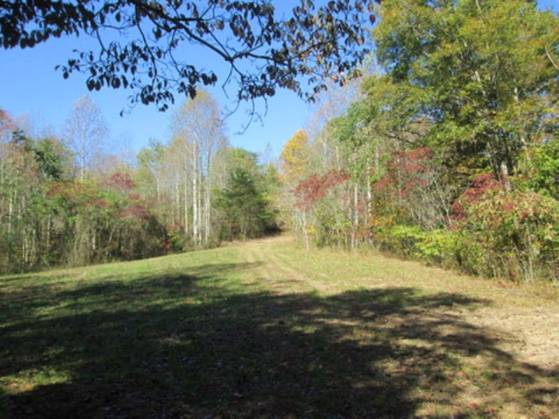 11.43 Wooded Acres : Columbia : Adair County : Kentucky