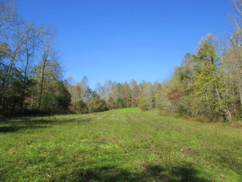 18.54 Wooded Acres : Columbia : Adair County : Kentucky
