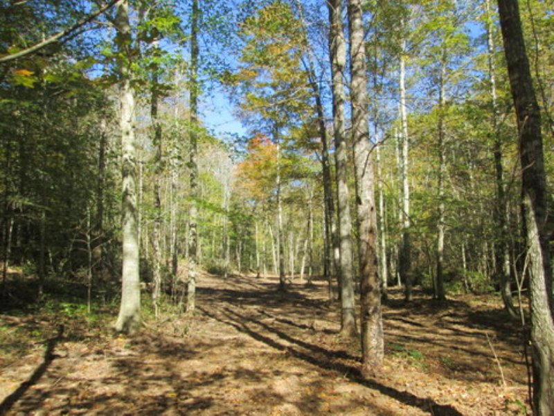 31.99 Wooded Acres : Columbia : Adair County : Kentucky