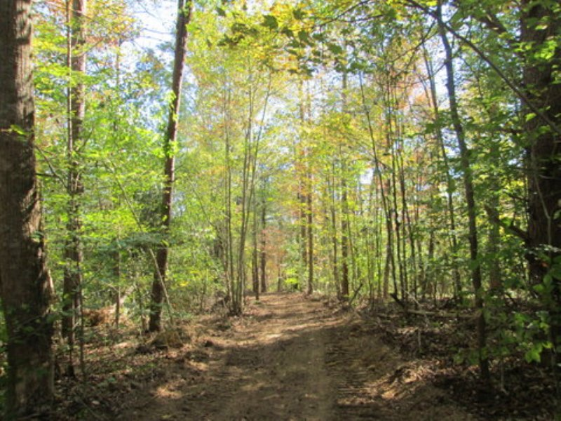 16.55 Wooded Acres : Columbia : Adair County : Kentucky