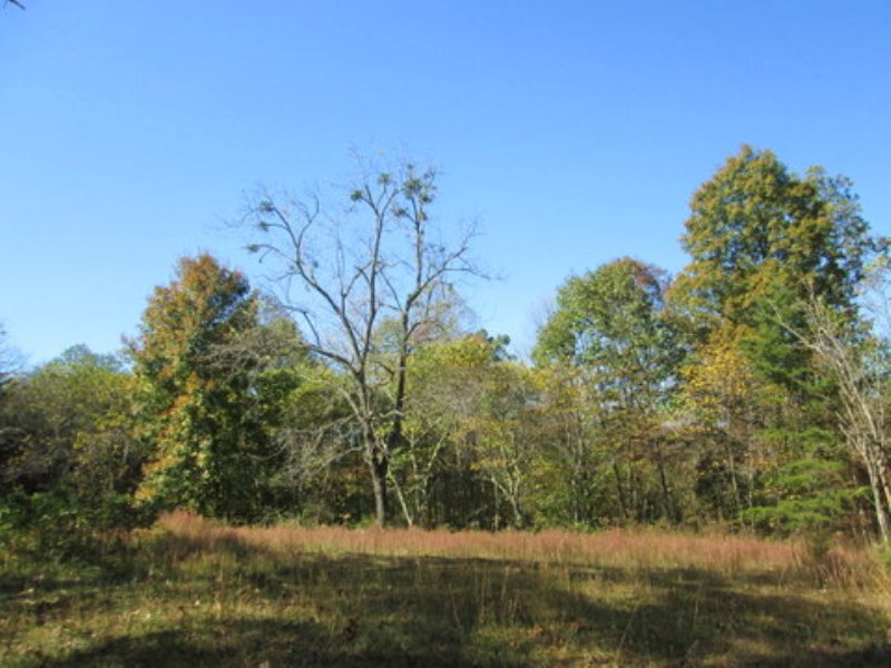 13.61 Wooded Acres : Columbia : Adair County : Kentucky