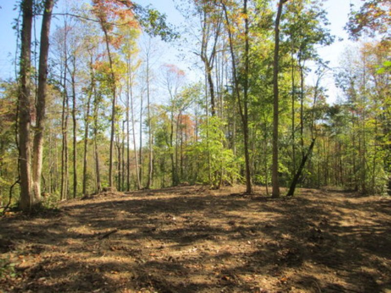 48.54 Wooded Acres : Columbia : Adair County : Kentucky