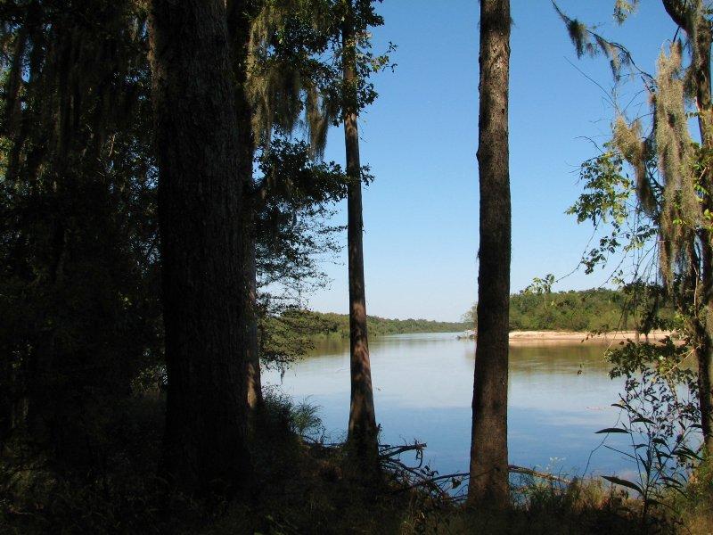 Altamaha Bluff : Jesup : Wayne County : Georgia
