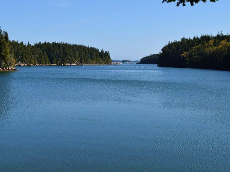 Great Wass Island Acreage : Beals : Washington County : Maine