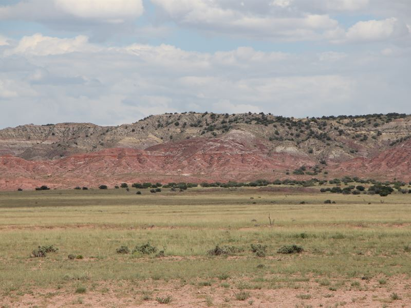 Secluded Northern Az Ranch : St. Johns : Apache County : Arizona