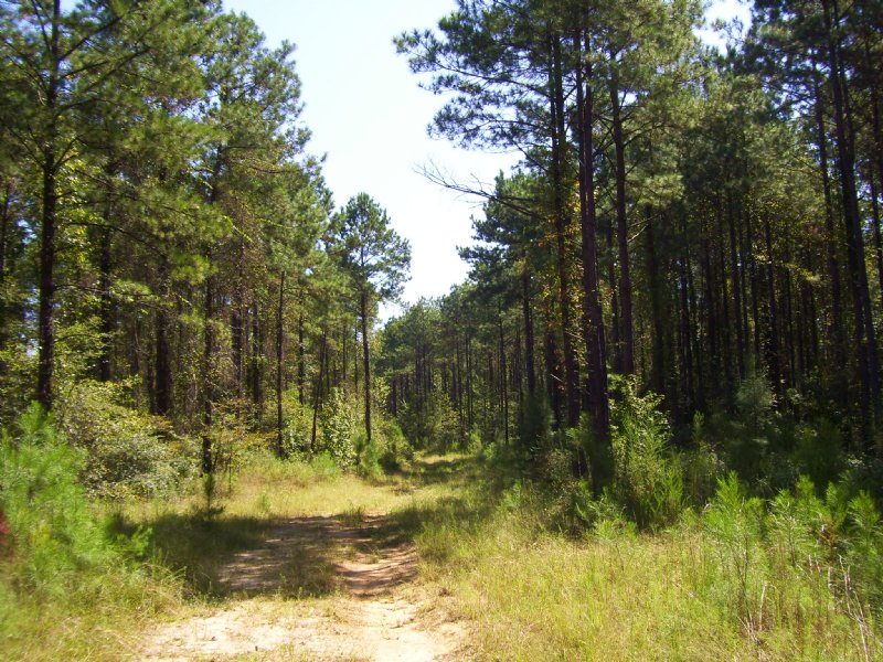 249 Acre Timber Invest./ Hunting : Blakely : Early County : Georgia