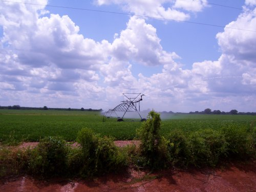 Irrigated Farm : Blakely : Early County : Georgia