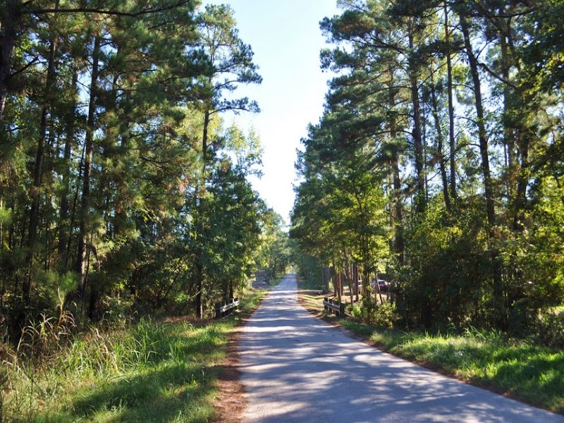 25 Acres Counts Road : Pointblank : San Jacinto County : Texas