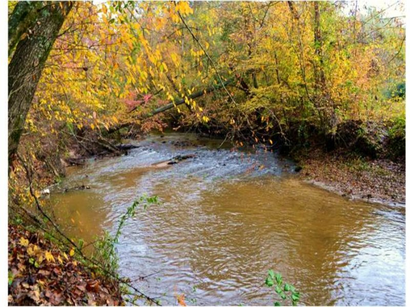 Black Walnut Grove : Gray Court : Laurens County : South Carolina