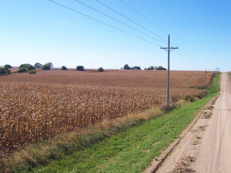 Farmland Auction : Weston : Saunders County : Nebraska