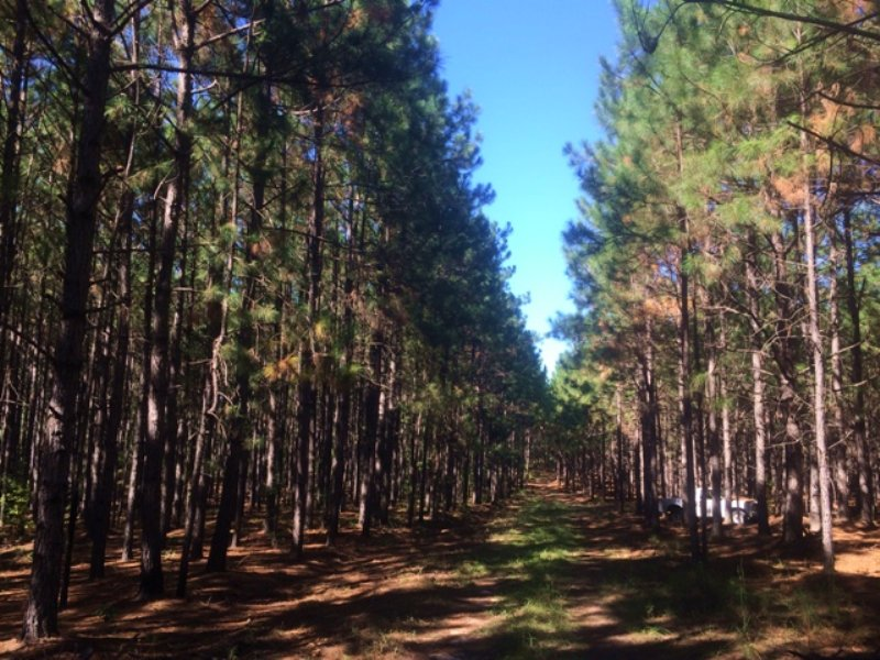 Hunters Retreat : Sylvania : Screven County : Georgia