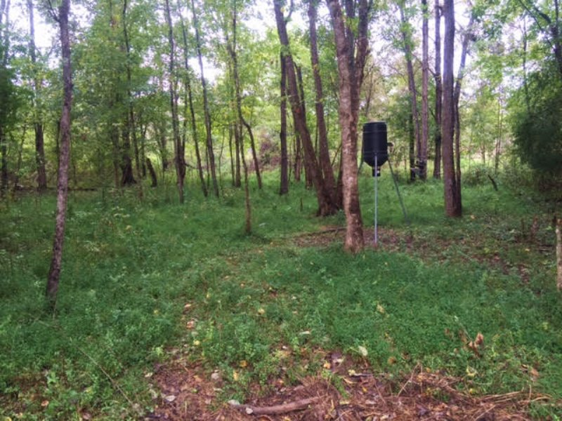 Dividable 230.43 +/- Wooded Acres : Milledgeville : Baldwin County : Georgia
