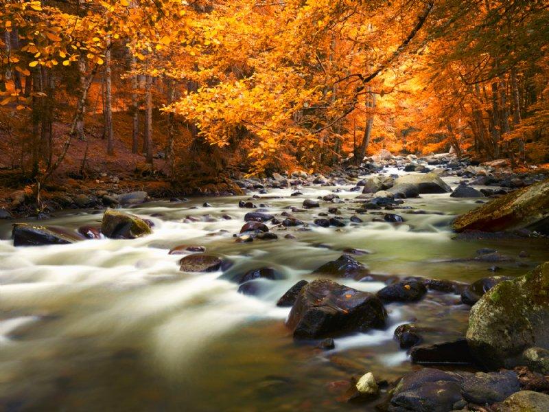 10.43 Acres 1650' Stream $17,900 : Ellijay : Gilmer County : Georgia