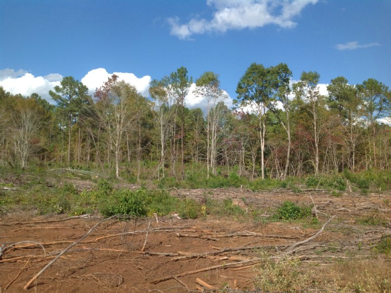 61 Acres In Perry County : Marion : Perry County : Alabama