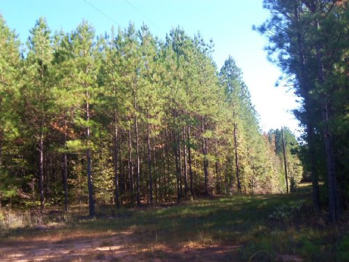 Great Timber Investment : Petrey : Crenshaw County : Alabama