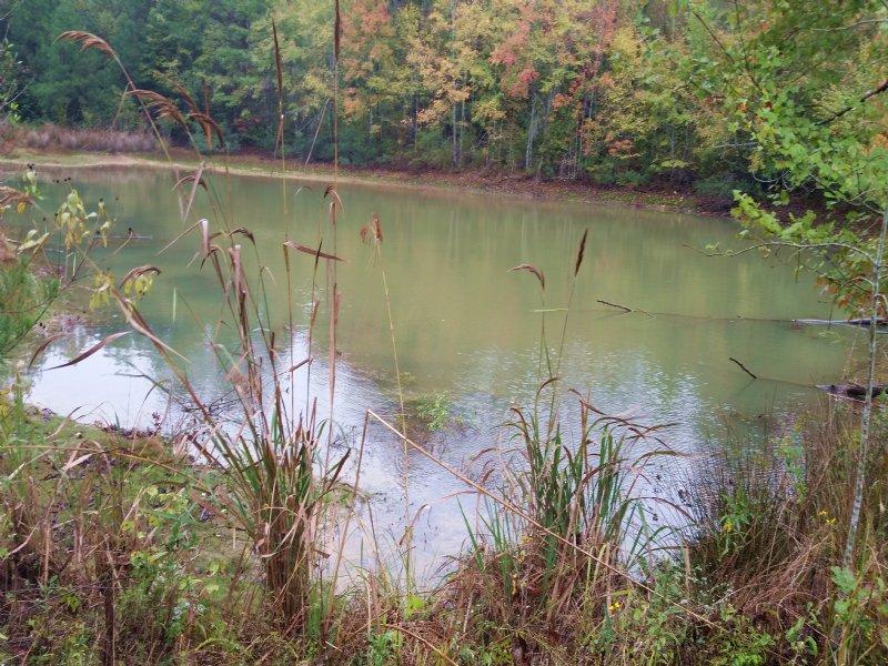 Beeman Creek Tract : Troy : Pike County : Alabama