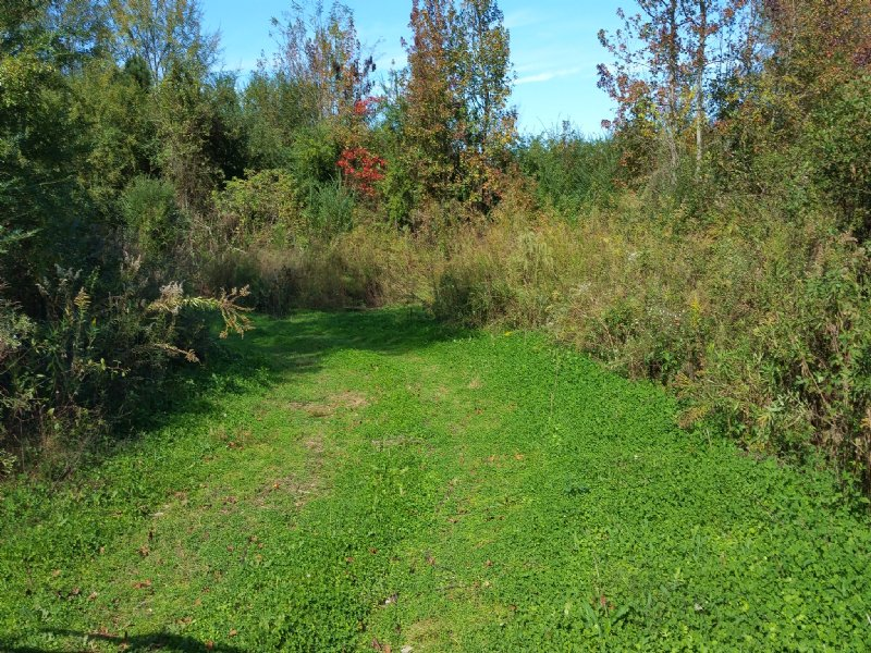 126 +/- Acres Hunting Land For Sale : Lincoln : Talladega County : Alabama