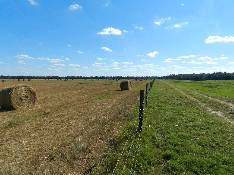 625 Ac Working Cattle Farm : Milledgeville : Baldwin County : Georgia